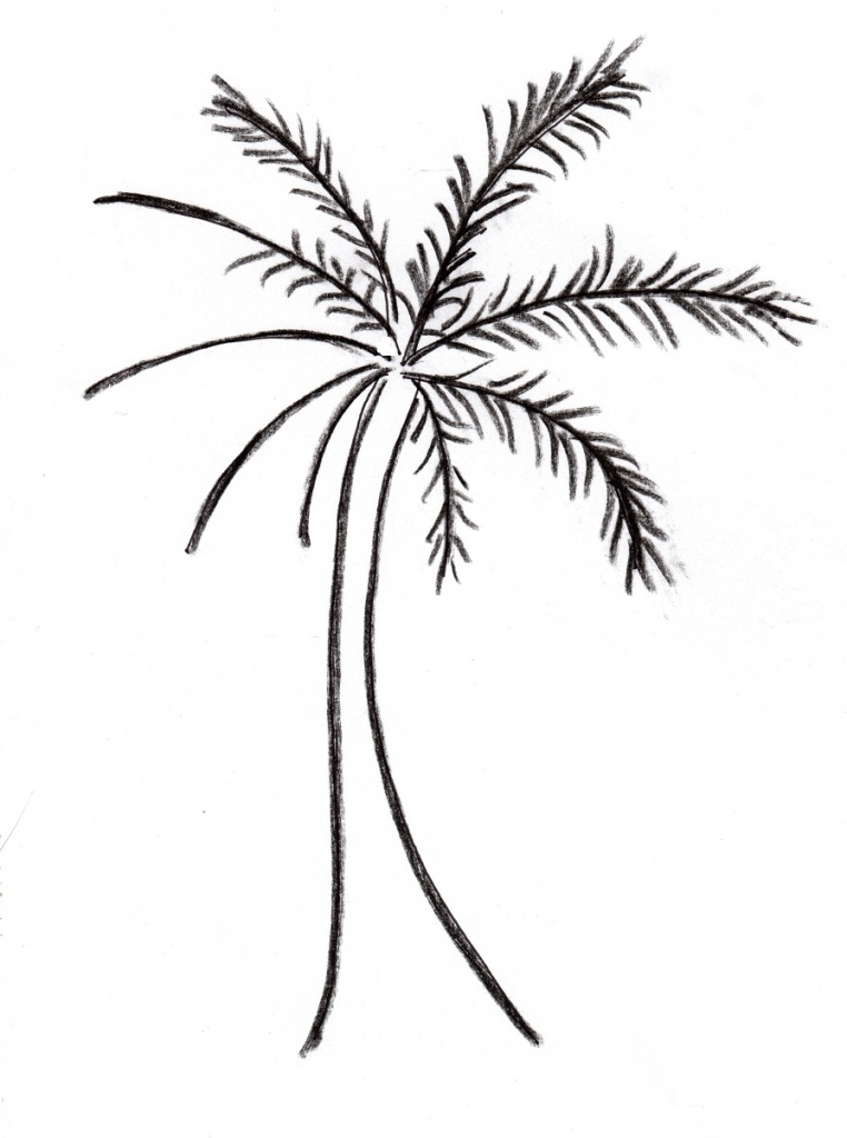 762x1024 Palm Trees Drawing Palm Tree Drawing Samantha Bell
