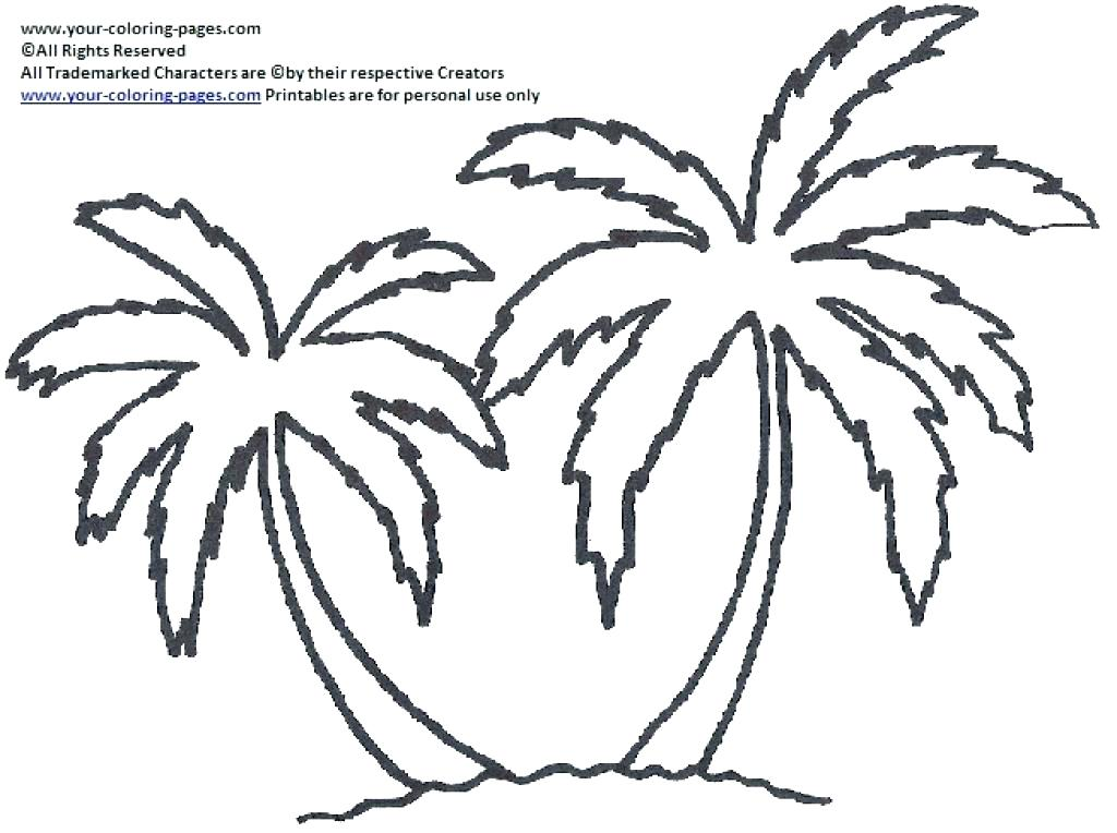1024x764 Classy Palm Tree Coloring Page Crayola Photo Trees Pages Summer