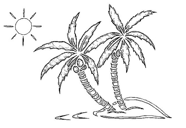 640x441 Swaying Palm Tree Coloring Page