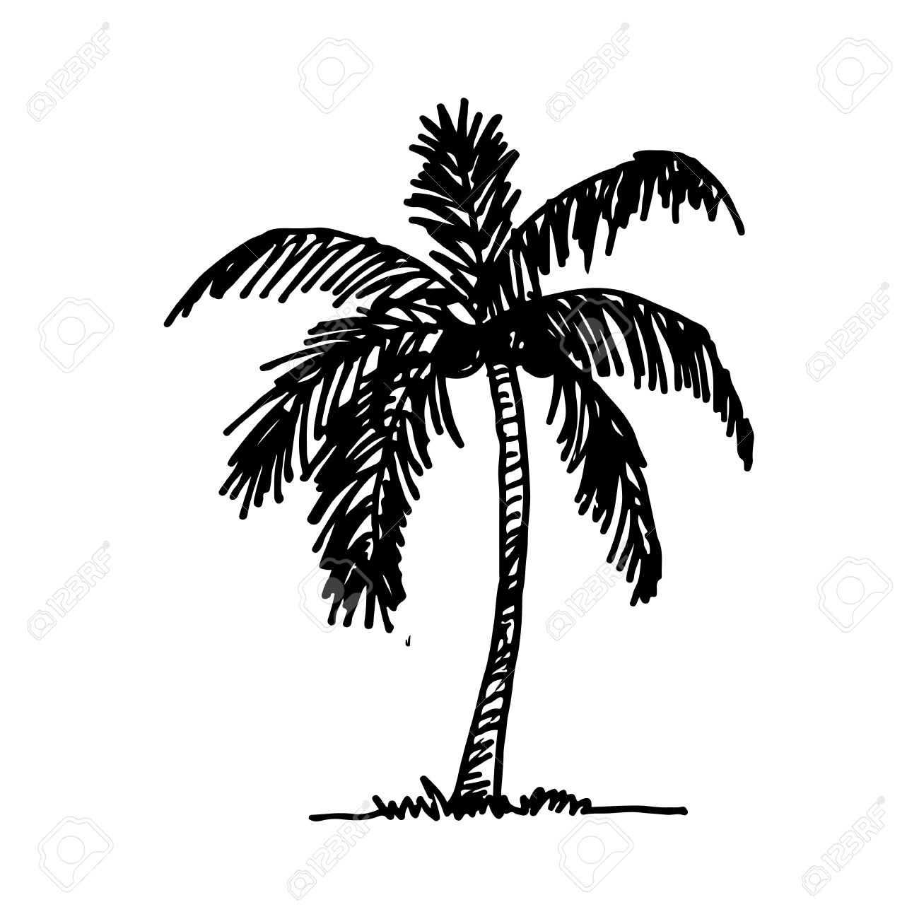 1300x1300 Coconut Tree Drawing Drawn Palm Tree Coconut Tree