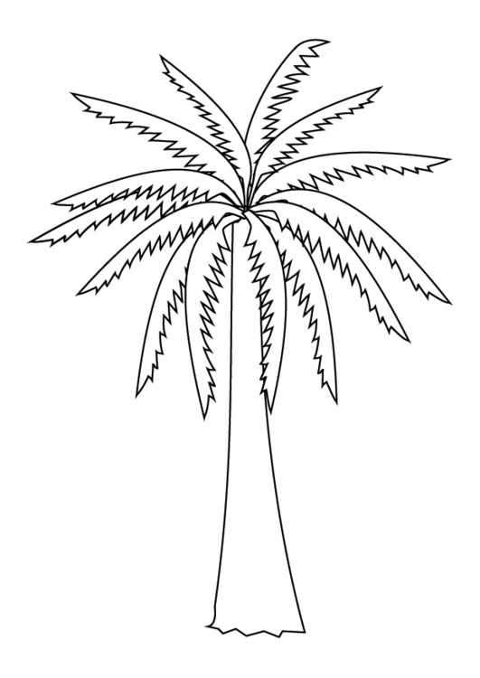 531x750 Coloring Page Palm Tree