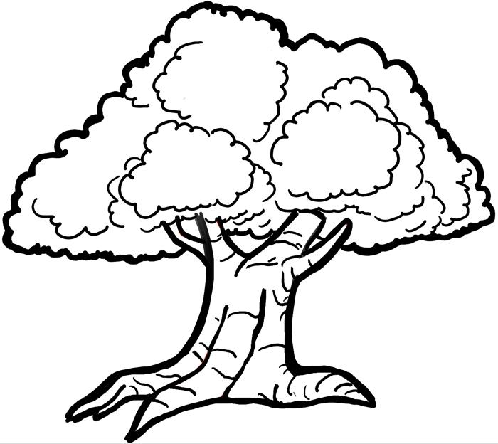 700x624 Easy Tree Drawings Easy Tree Drawings 700 X 624 Home Designs Idea