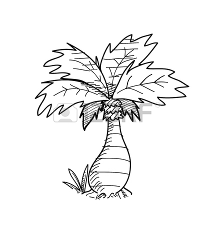 428x450 Palm Tree Doodle, A Hand Drawn Vector Doodle Illustration