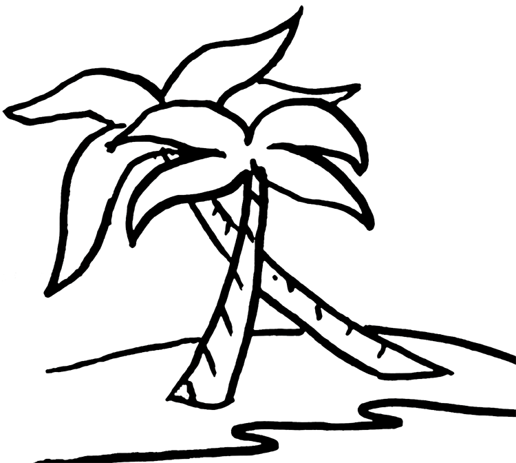 750x672 Palm Tree Pictures