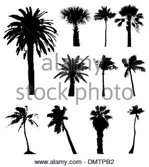 300x336 Collection Of Vector Palm Trees Silhouettes. Easy To Edit, Any