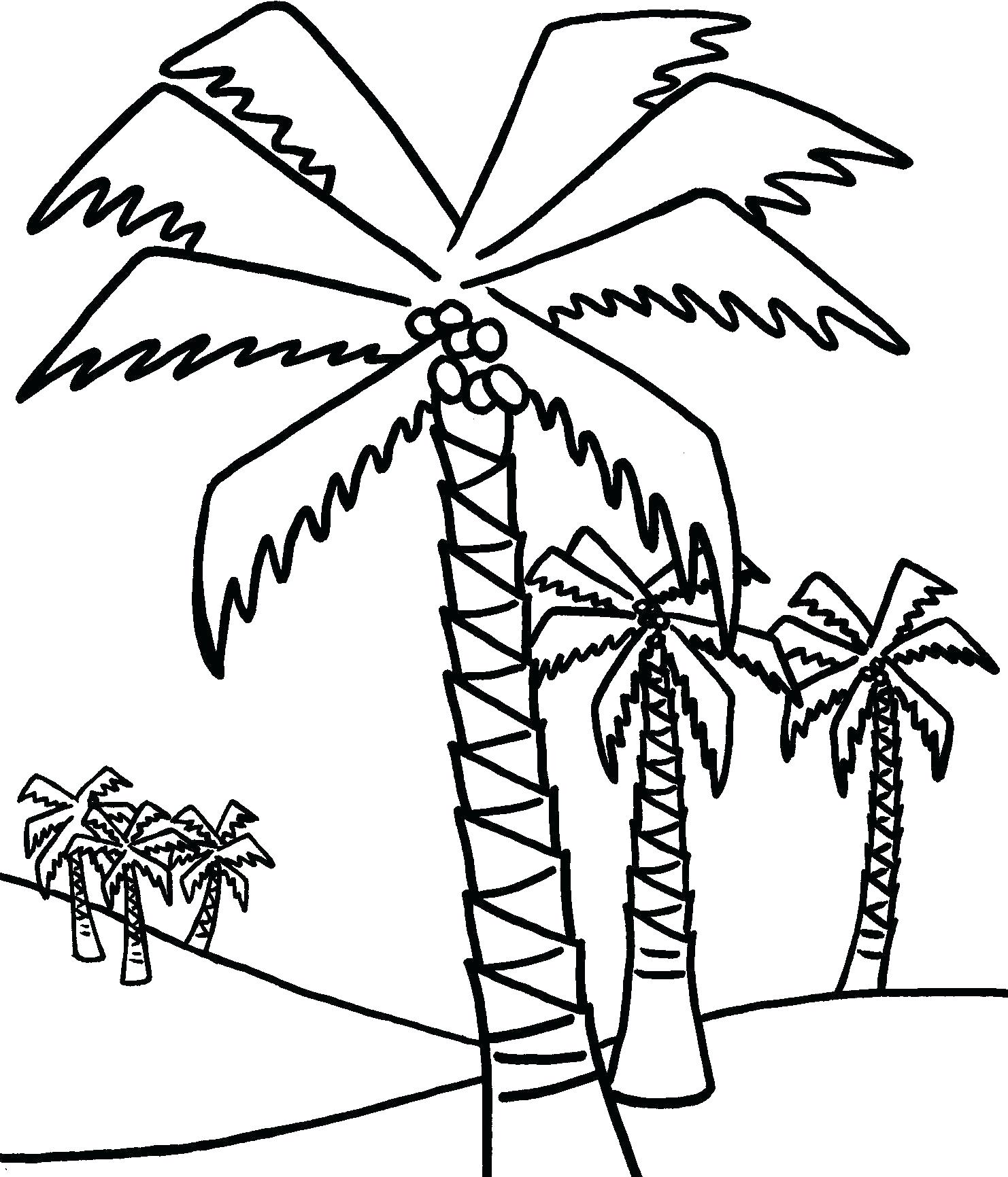 1482x1732 Coloring Palm Tree Coloring Pages