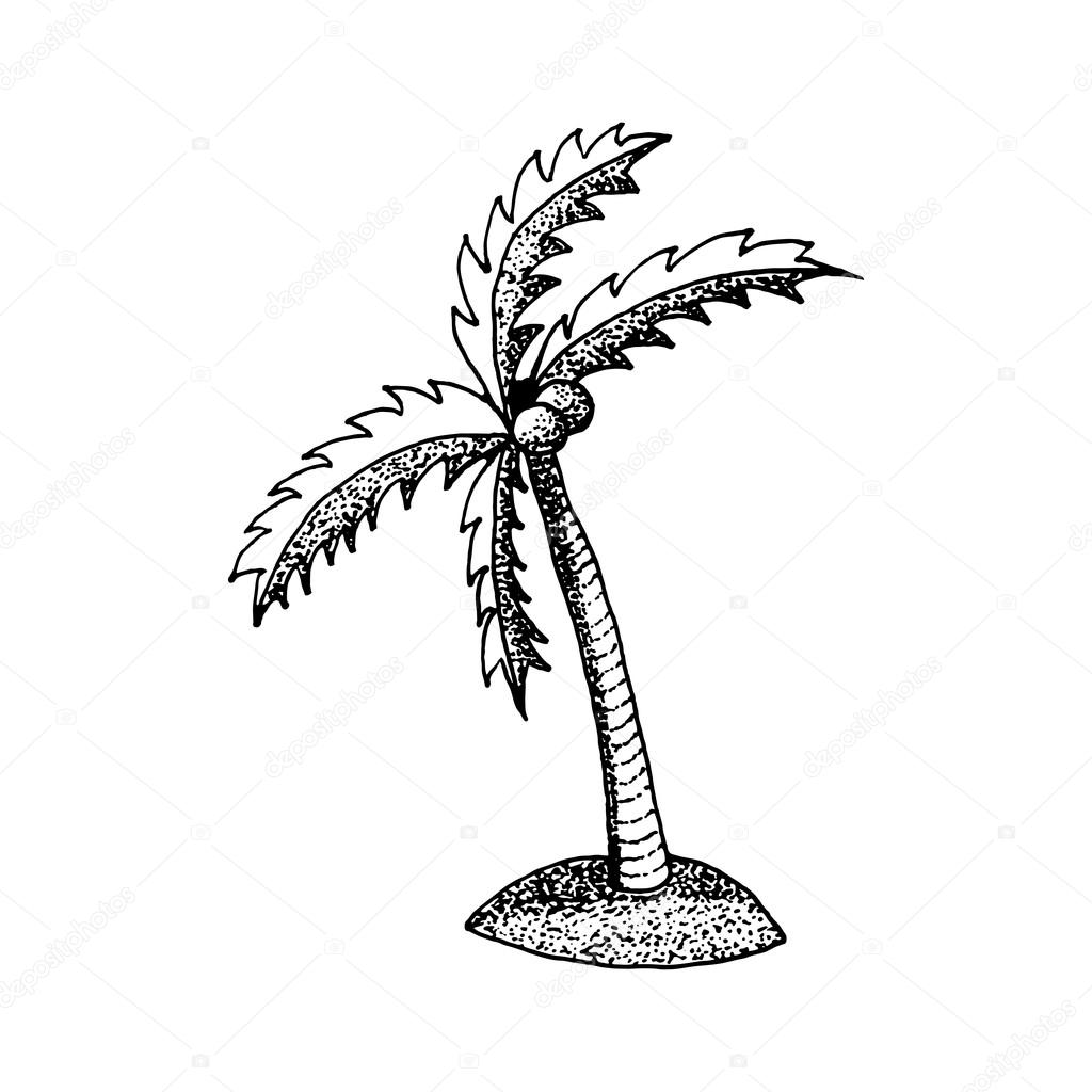 1024x1024 You Can Create This Palm Tree Drawing In Just Four Easy Steps 1