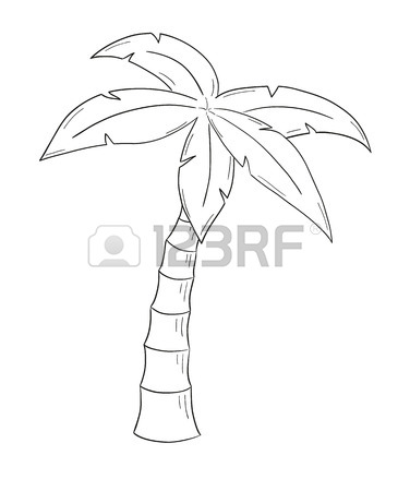 Palm Tree Drawing Outline