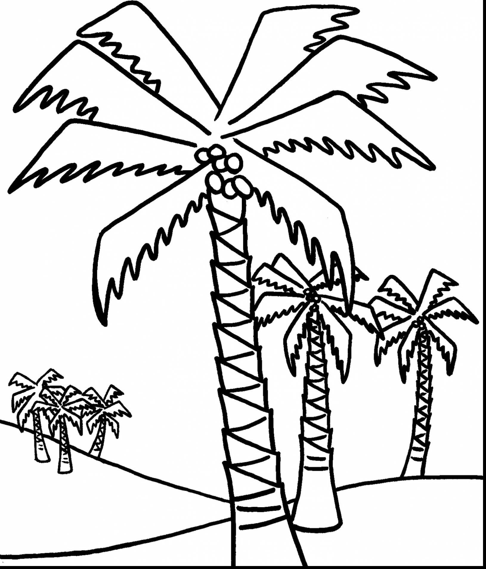 1630x1905 Contemporary Decoration Palm Tree Coloring Page Astounding Beach