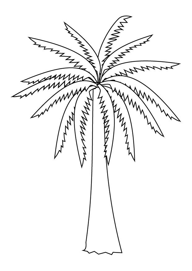 620x875 Palm Tree Coloring Picture Free Download