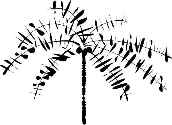 600x436 Palm Tree Drawing Outline Pictures Reference