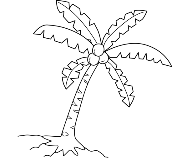 550x530 Palm Tree Coconut Clipart
