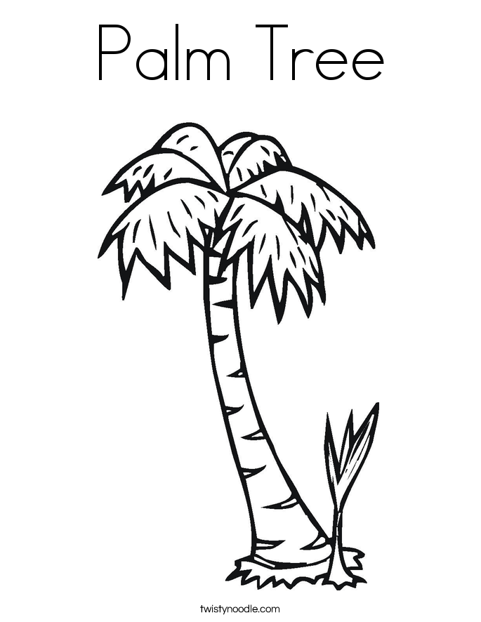 685x886 Palm Tree Coloring Page