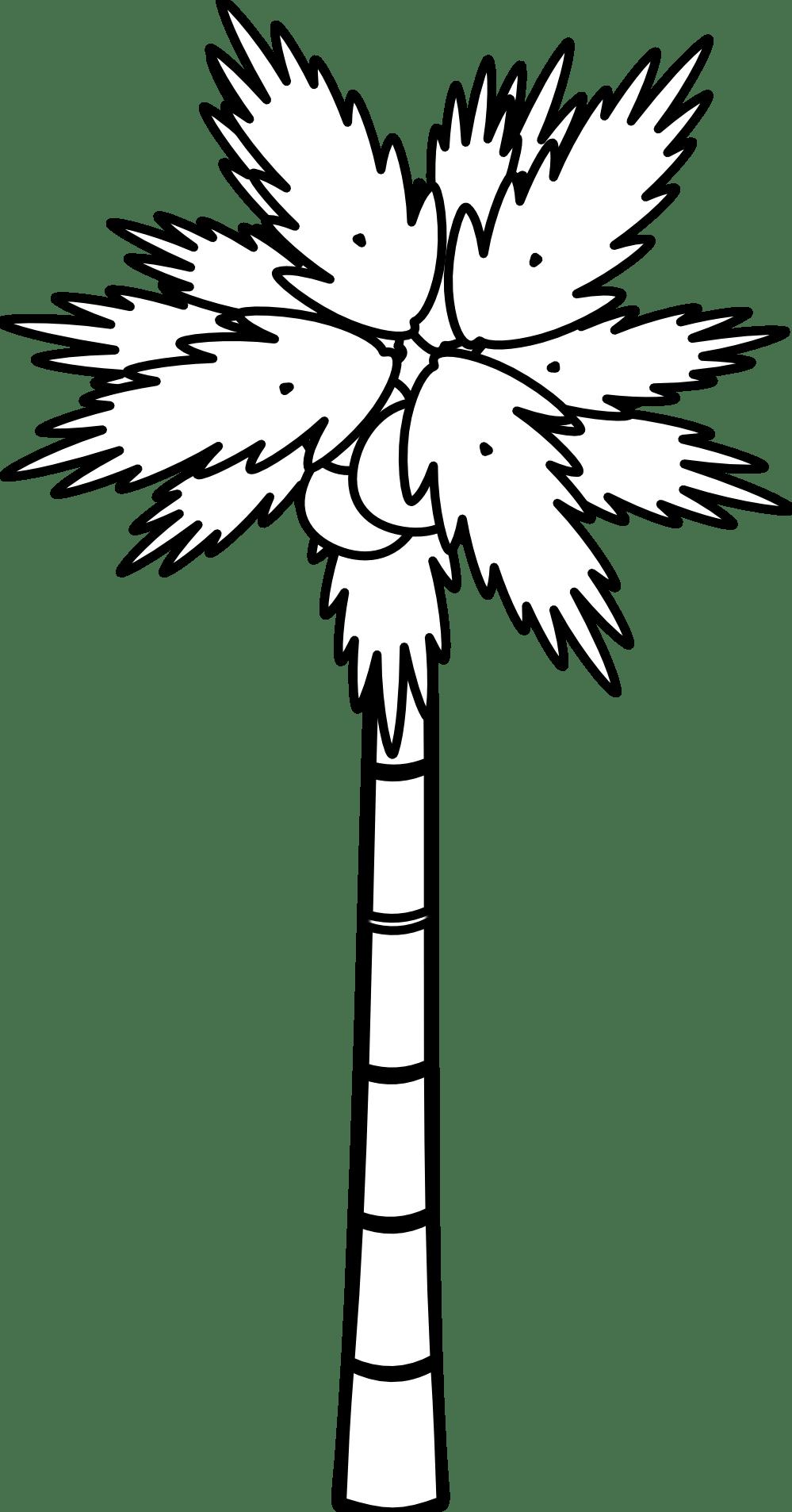999x1906 Black And White Palm Tree Drawing Tamanggoang