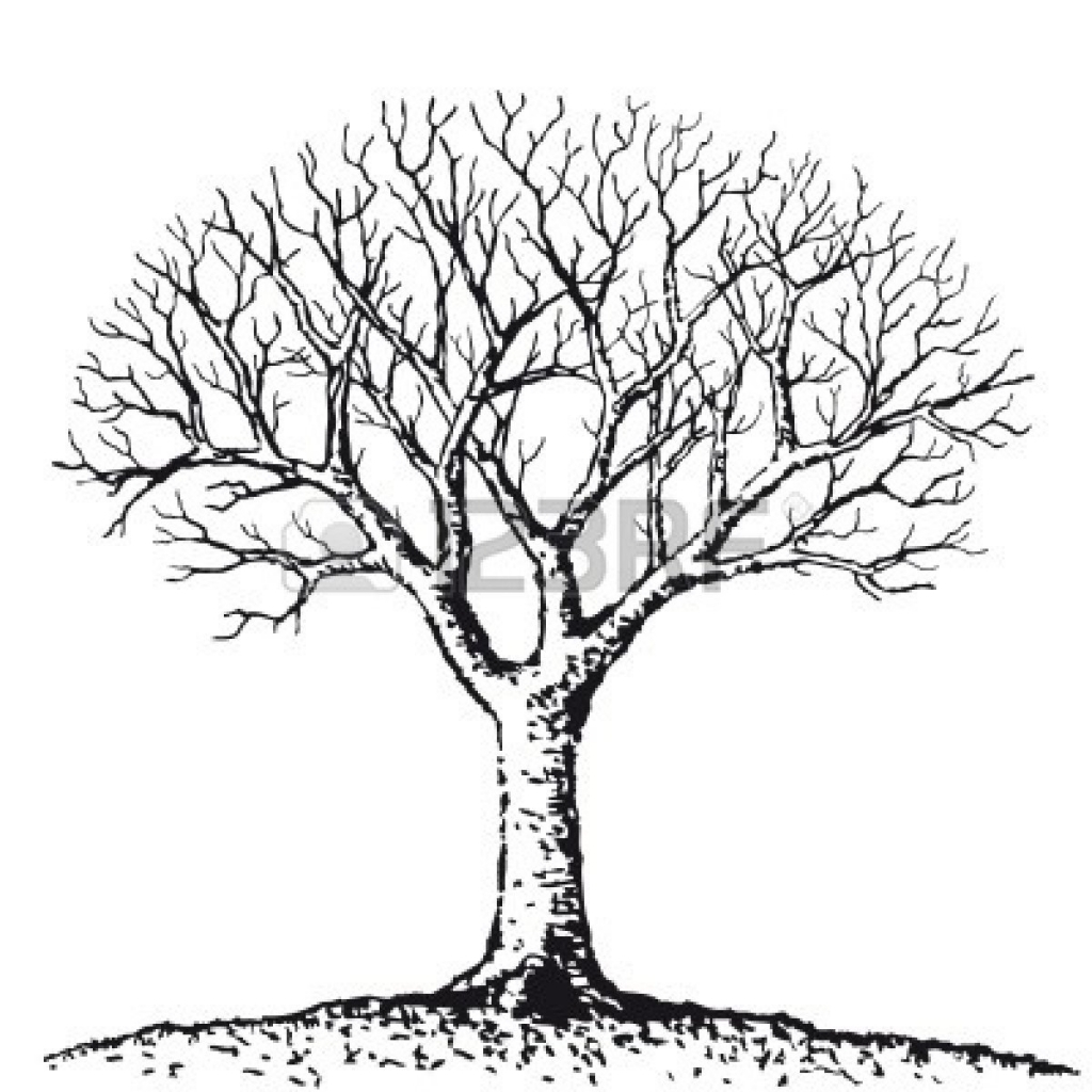1024x1024 Simple Tree Drawing Simple Black And White Tree Drawing Clipart