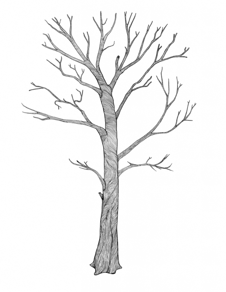 791x1024 Simple Tree Drawings