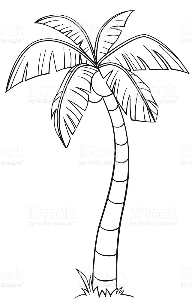 640x1024 Coconut Tree Drawing Free Clip Arts Sanyangfrp