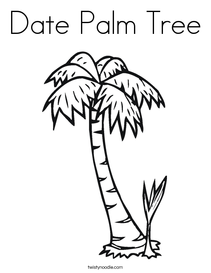 685x886 Date Palm Tree Coloring Page