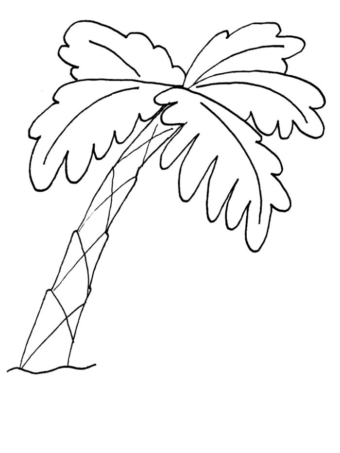 700x933 Palm Tree Coloring Pages On Page