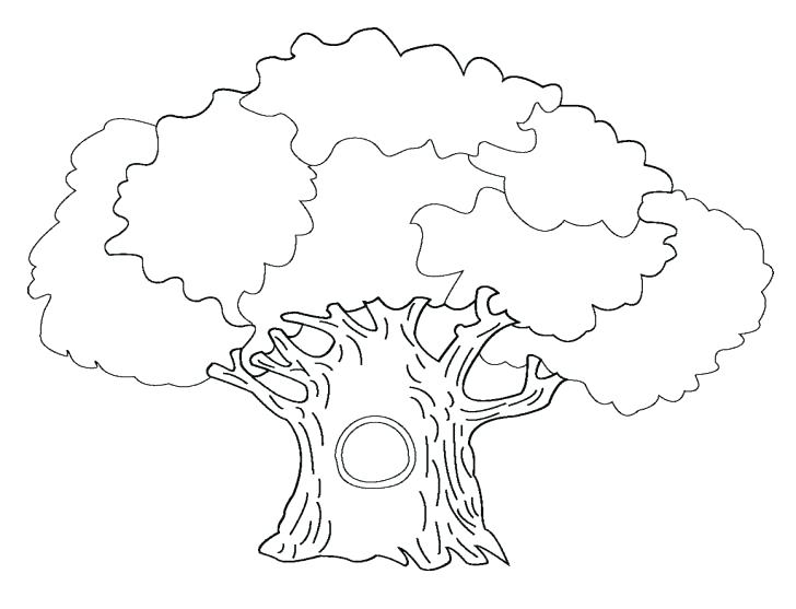 728x557 Palm Tree Coloring Pages Palm Leaf Coloring Page Tree Coloring