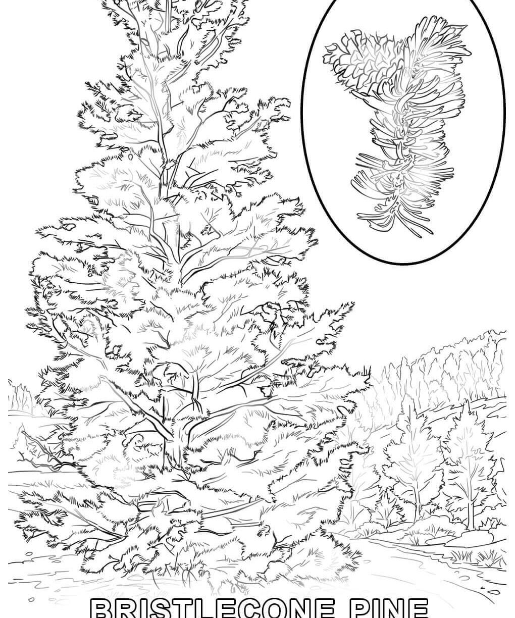 1020x1224 Tree Coloring Pages No Leaves Free Printable Kids For Kindergarten