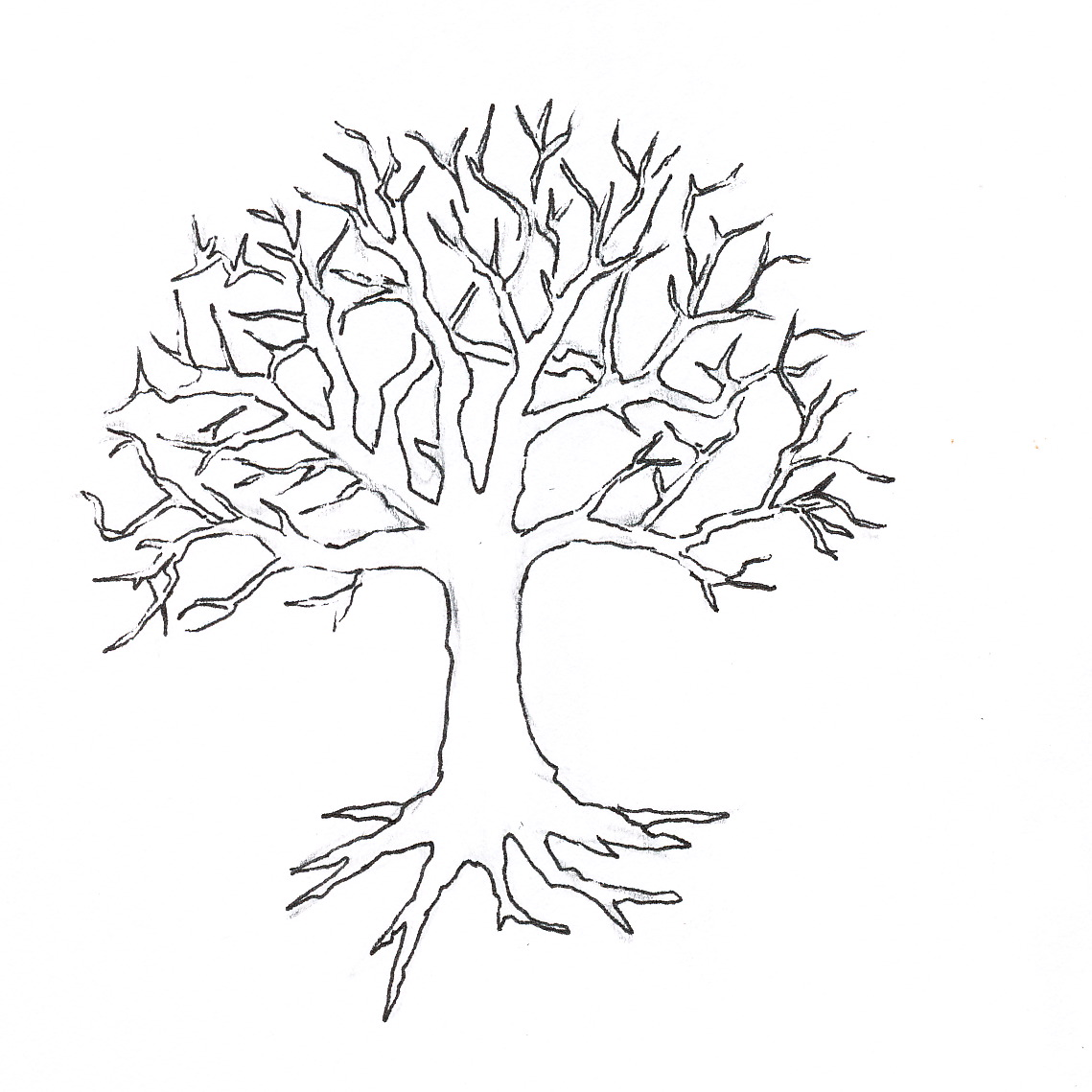 1139x1139 Bare Fall Tree Coloring Page Outline