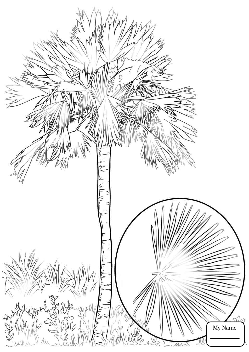 1040x1469 Coloring Pages For Kids Cabbage Palm Tree Trees Leaves