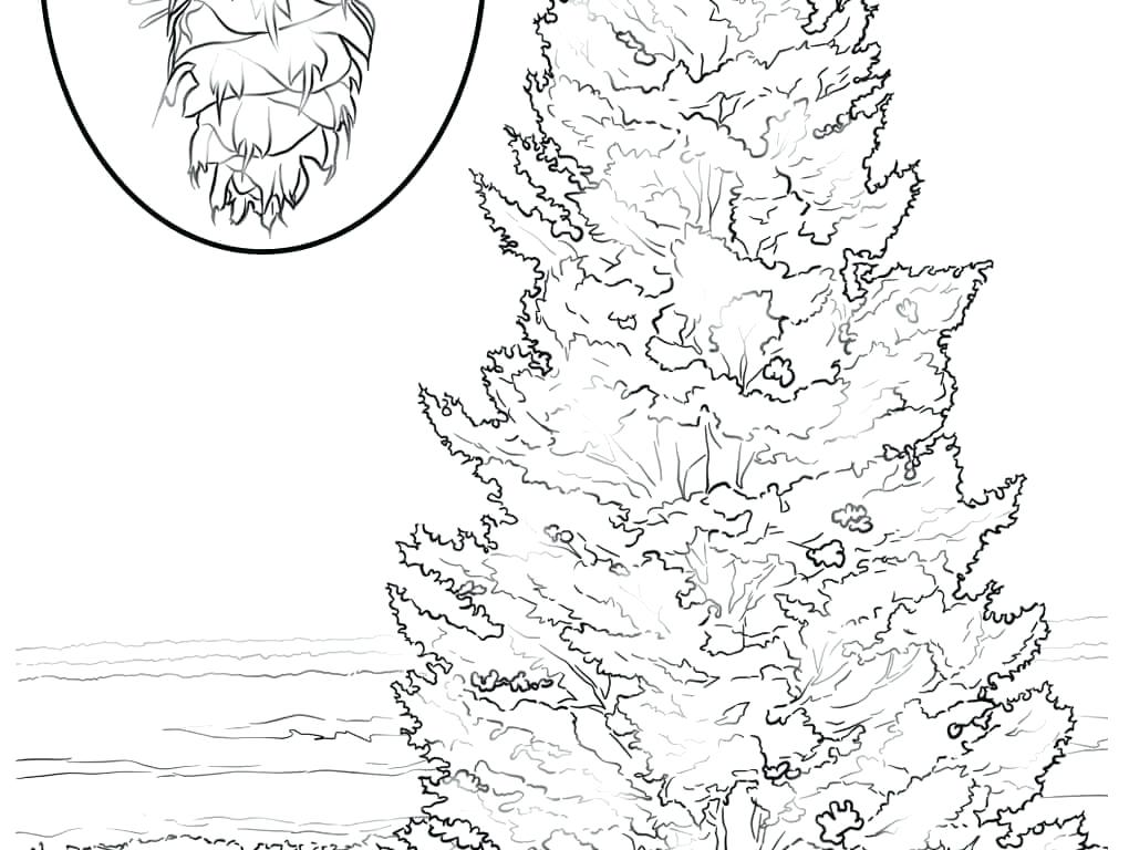 1020x768 Palm Trees Coloring Pages Synthesis.site