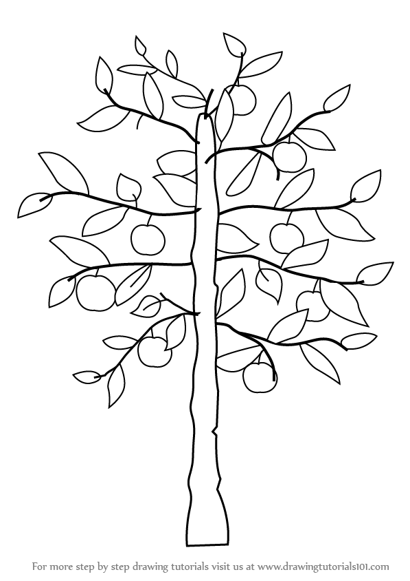 597x844 Learn How To Draw An Apple Tree (Trees) Step By Step Drawing