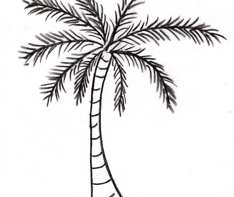 749x630 Palm Tree Drawing