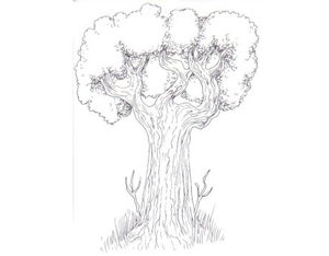 300x234 Drawing Trees How To Draw Trees, Branches, Leaves With Drawing