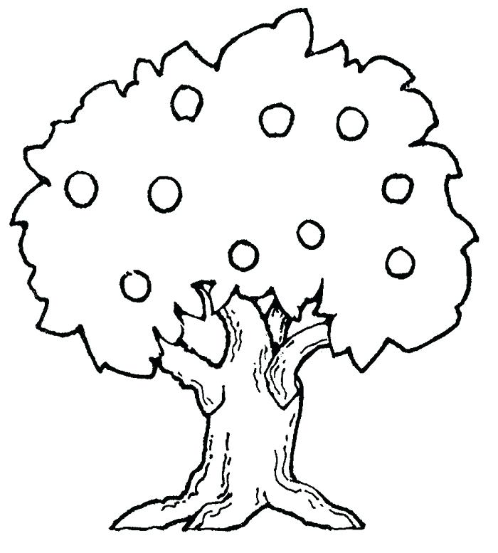 700x777 Coloring Pages Tree Leaf Fall Tree Coloring Pages Trees Latest