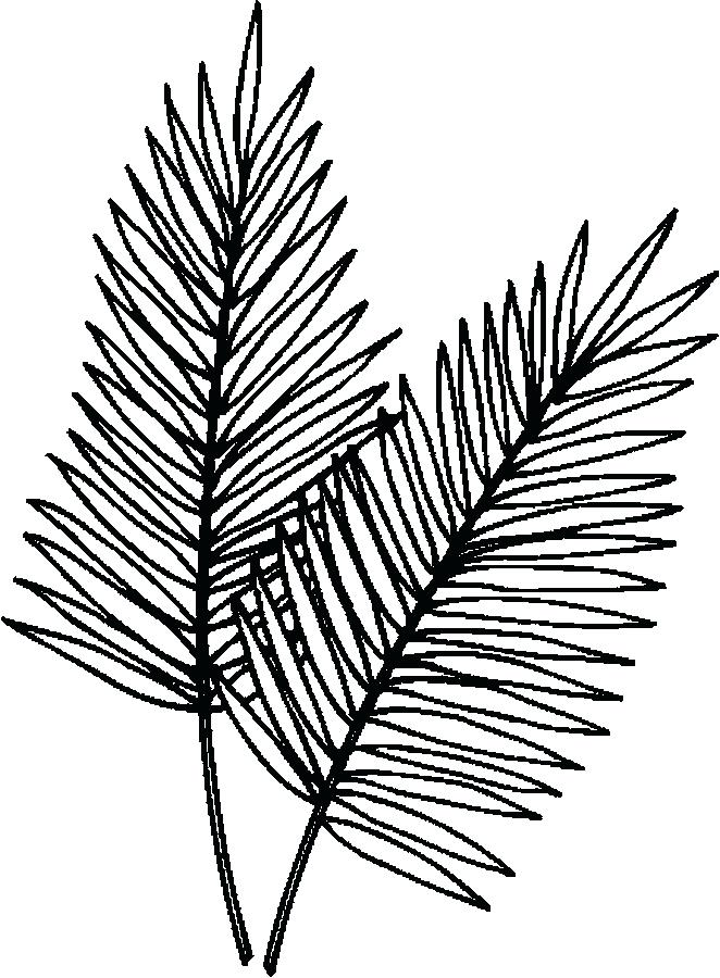 662x900 Palm Leaf Coloring Page Palm Leaves Coloring Page Palm Tree Leaves