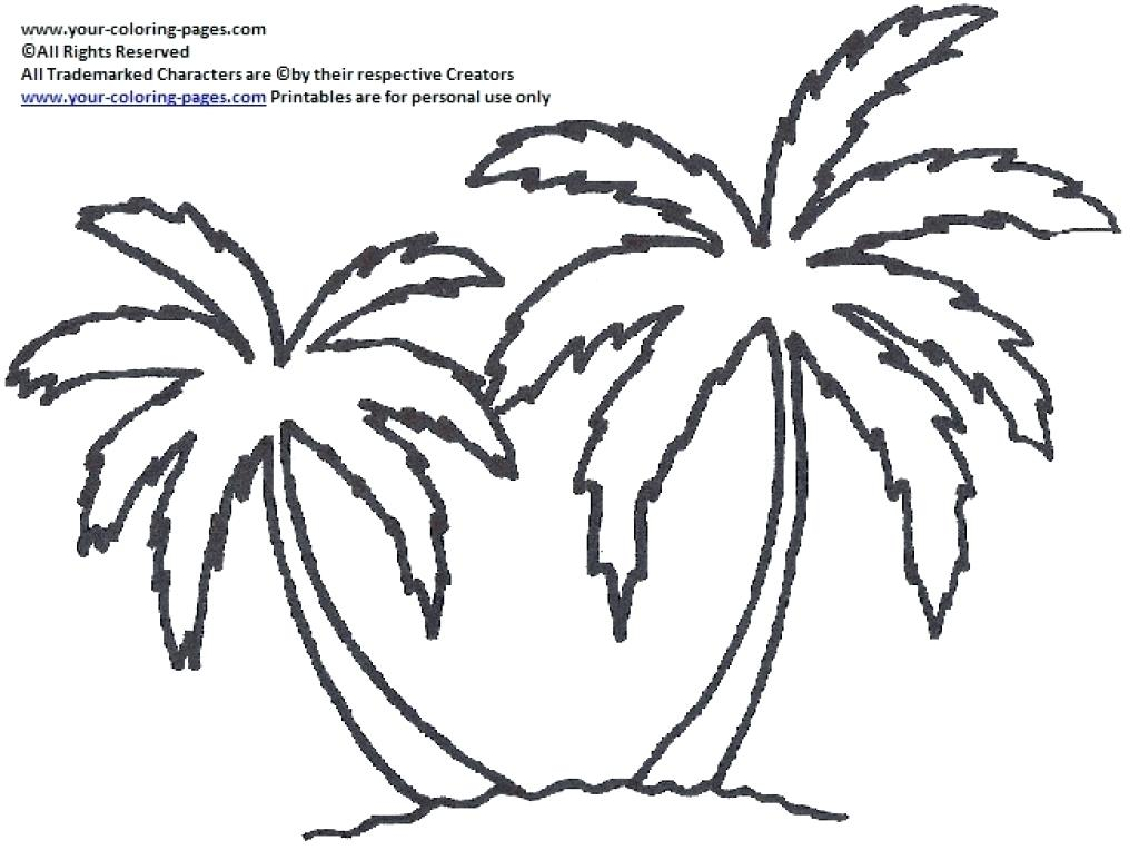 1024x764 Palm Tree Coloring Pictures Adult Apple Page For Kids Printable