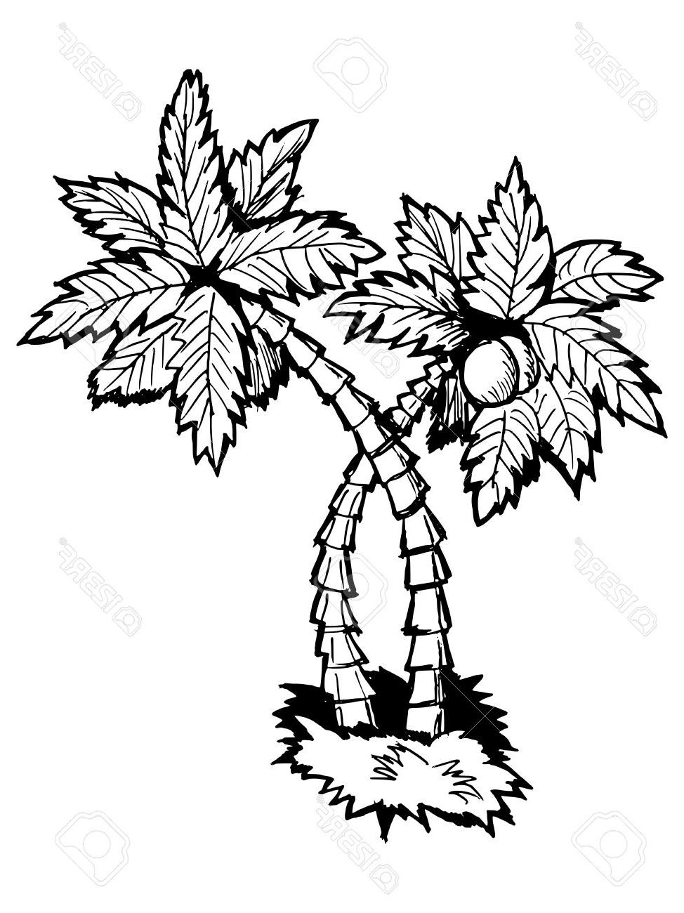 974x1300 Best Hand Drawn Vector Cartoon Illustration Of Palm Tree Stock