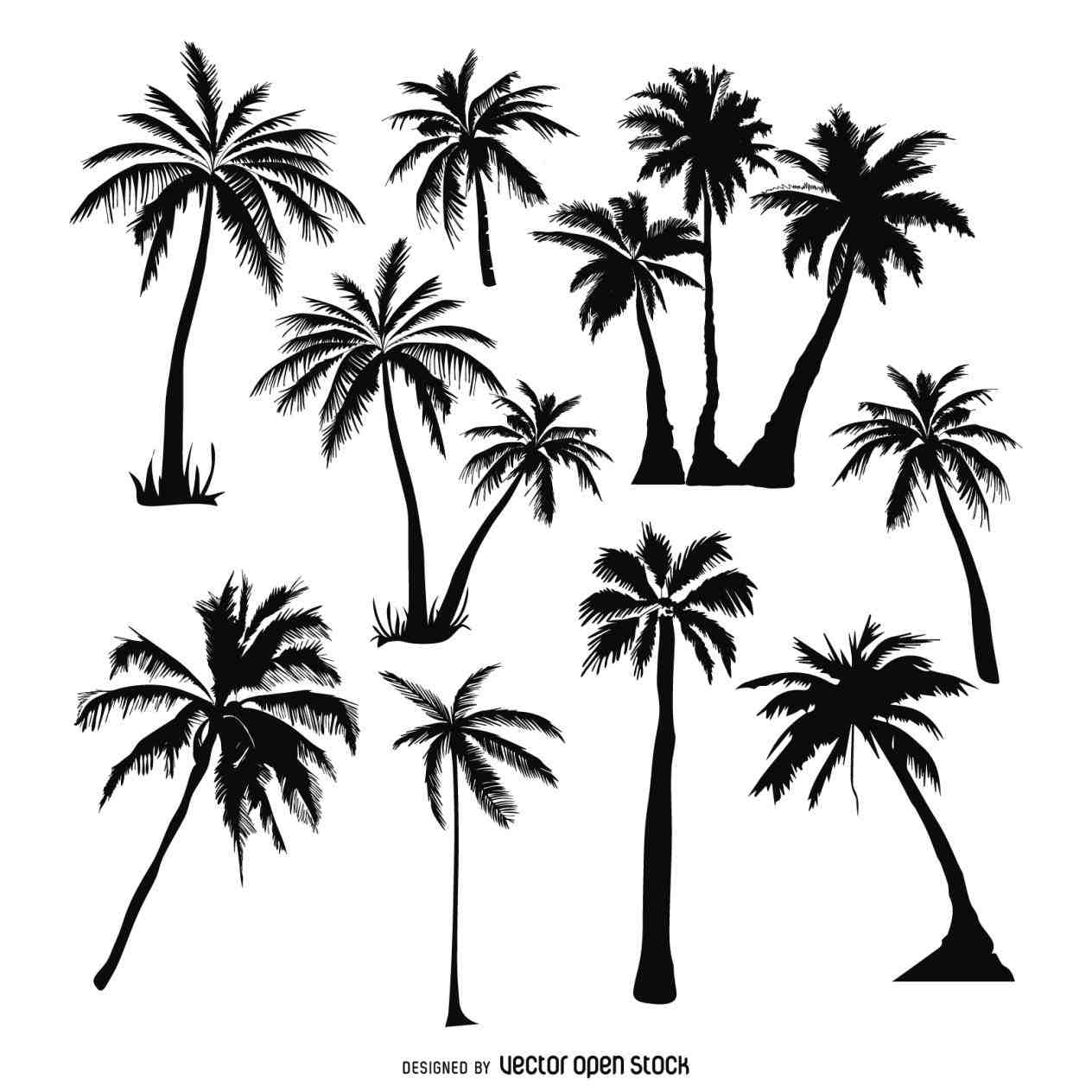 1264x1264 How To Draw A Palm Tree Leaves