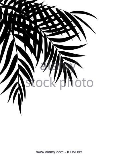 415x540 Coconut Palm Tree Leaf Black And White Stock Photos Amp Images