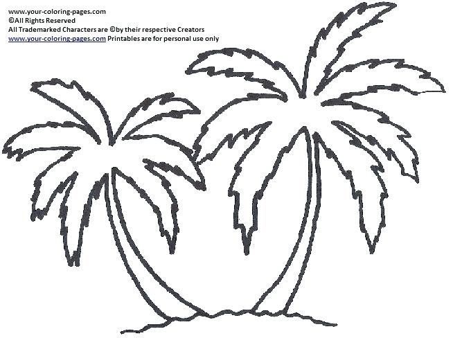 654x488 Palm Leaf Coloring Page Template Printable Pal On Free Trees