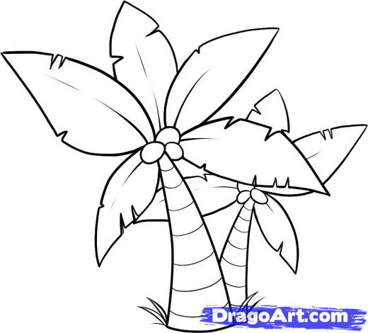 520x470 Step 10. How To Draw Palm Trees Drawing Palm
