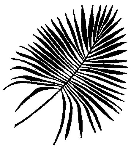 441x500 Palm Leaf Print Vectors