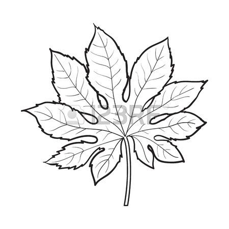450x450 Full Fresh Leaf Of Fatsia Japonica Palm Tree, Sketch Style Vector