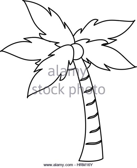 442x540 Coconut Palm Tree Leaf Black And White Stock Photos Amp Images