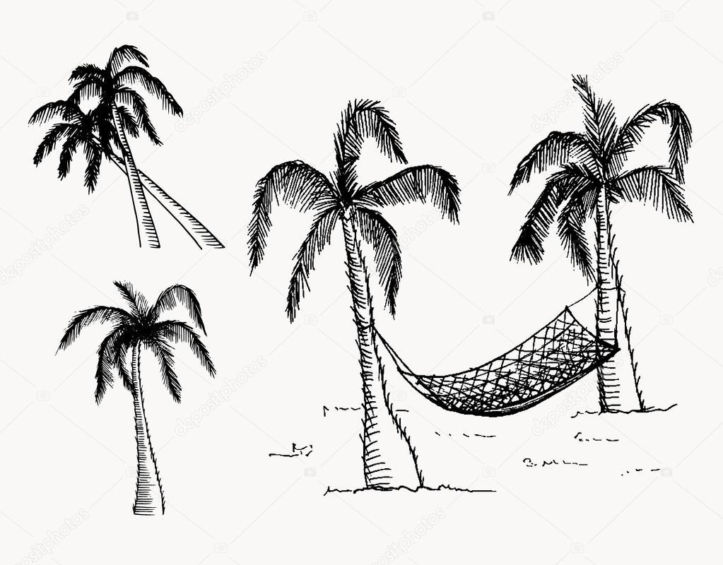 1023x800 Hand Drawn Palm Trees Stock Vector Zubroffka
