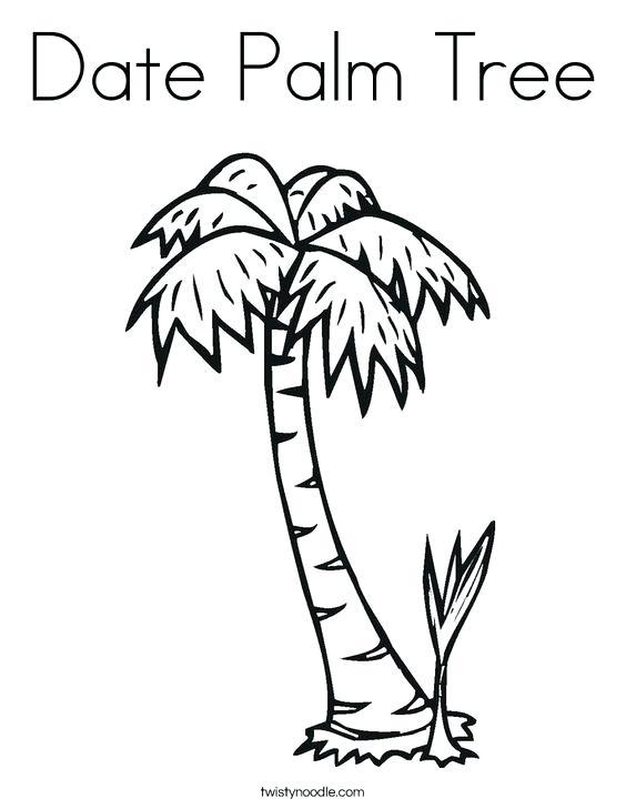 564x729 Palm Tree Coloring Pages Plus Pin Drawn Beach Palm Tree Free