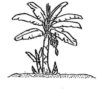 400x365 Banana Clipart Line Drawing