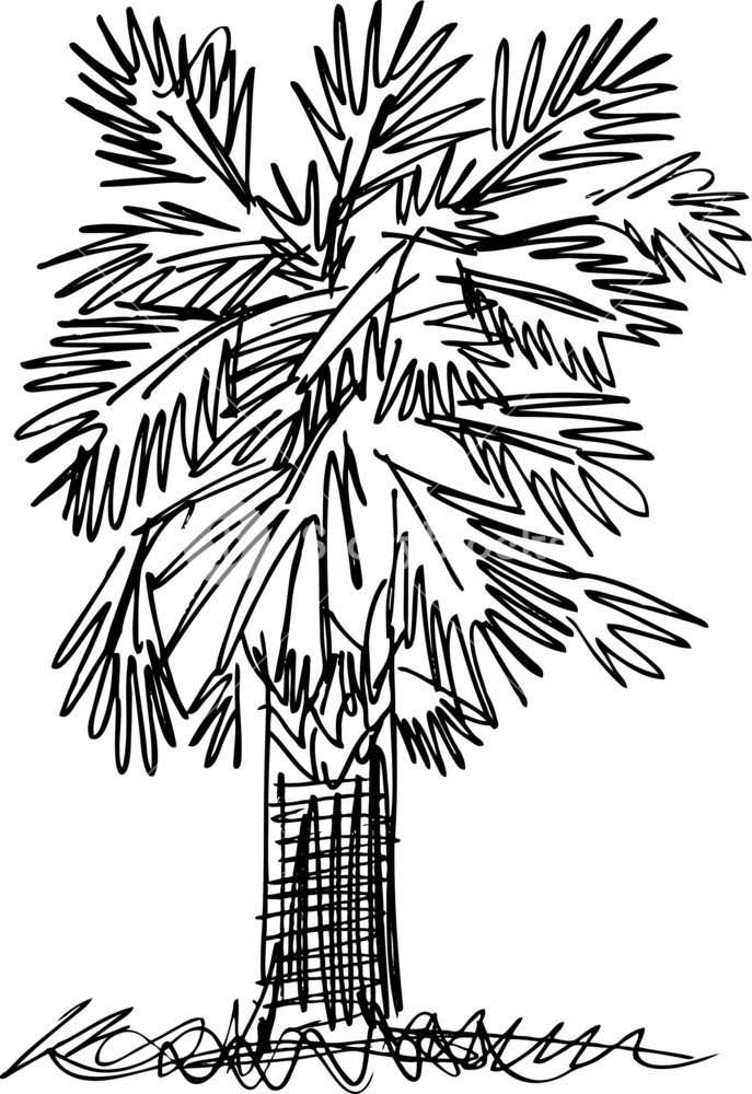 687x1000 Sketch Of Abstract Palm Tree. Vector Illustration Royalty Free
