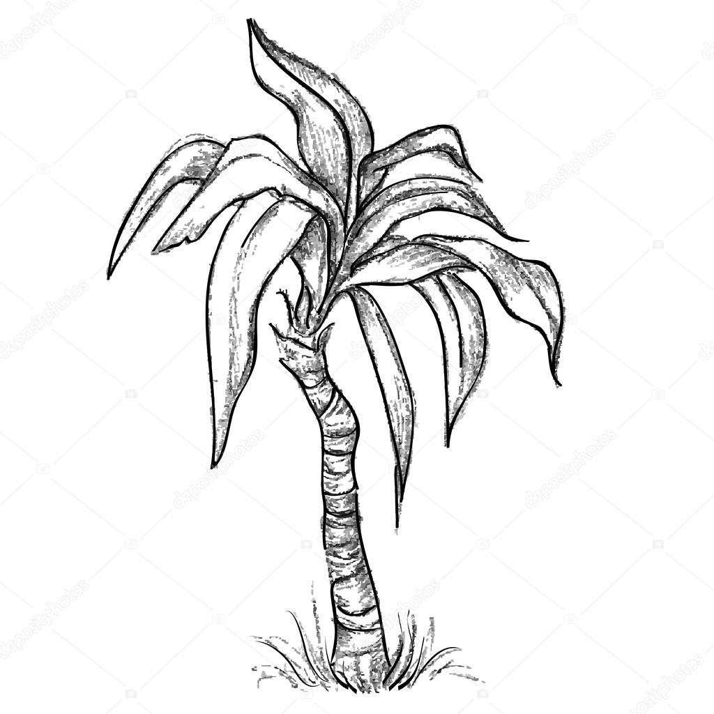 1024x1024 Dibujo De Palmeras Tropicales Vector De Stock Vitasunny