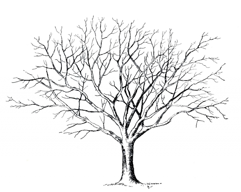 1024x816 Drawings Of Trees With Leaves