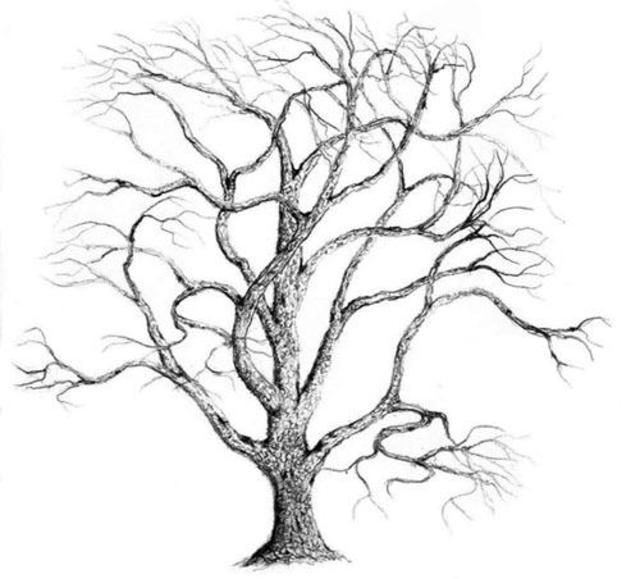 640x579 James Parker Artwork Bare Oak Original Drawing Pencil