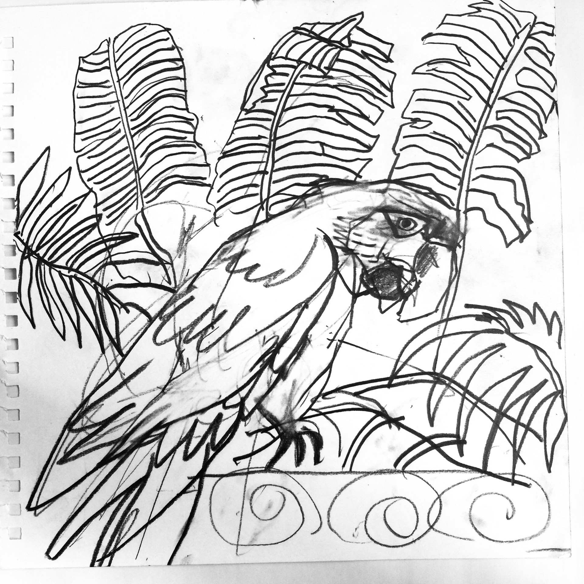 1920x1920 Original Pencil Drawings, Sketches Of Birds, Tropical Flowers